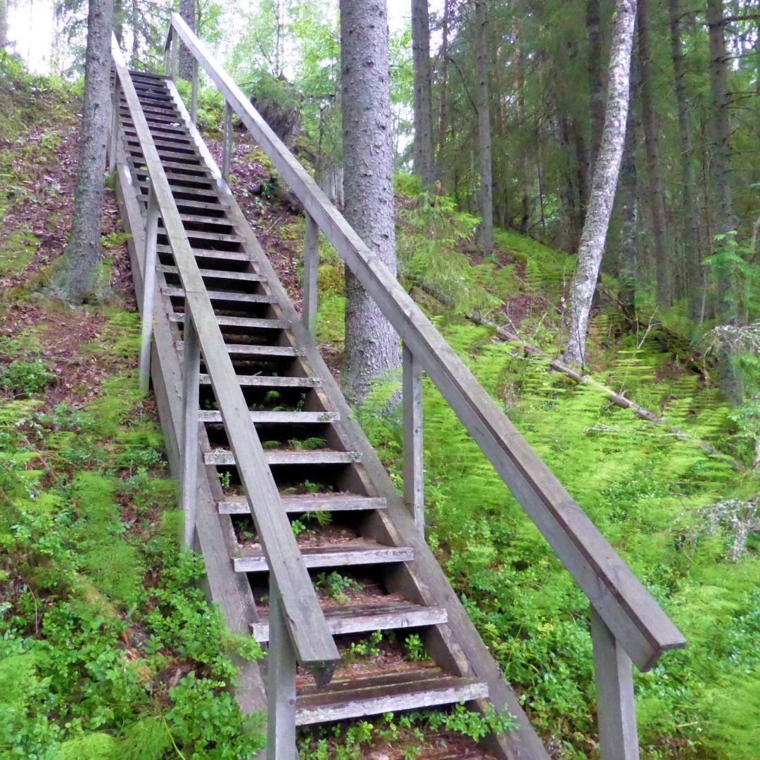 Metsäiset kapeat mutta pitkät portaat.